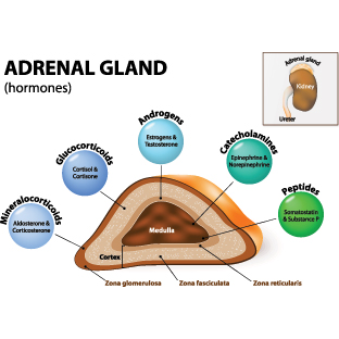 Adrenal Support Adaptogen Formula Energy And Vitality