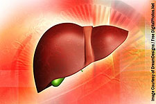 The Amazing Self-Regenerating Liver