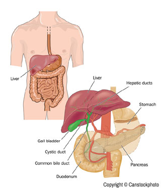 gallbladder, pancreas and bile ducts